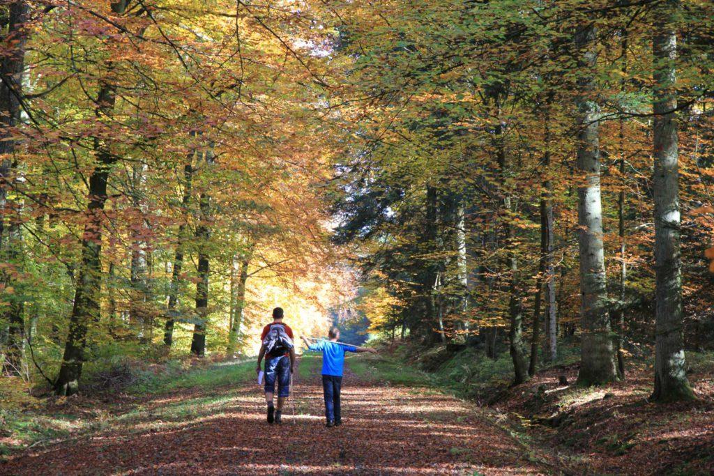 ostbelgien-wandern-herbst-17 - © Eastbelgium.com